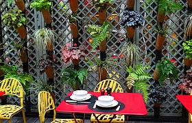 法国餐厅的植物算盘