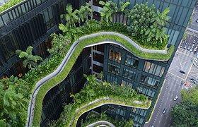 新加坡皮克林皇家公园