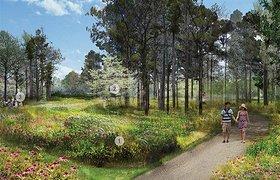 从毁坏到复原:休斯顿植物园和自然中心