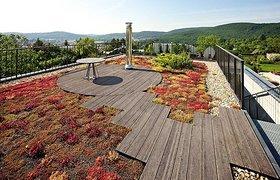 A Moss Garden